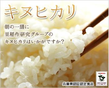 匠の逸品 特別栽培米 キヌヒカリ